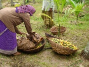 Women working at a farm