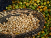 Raw areca nut fruits and kernel side by side